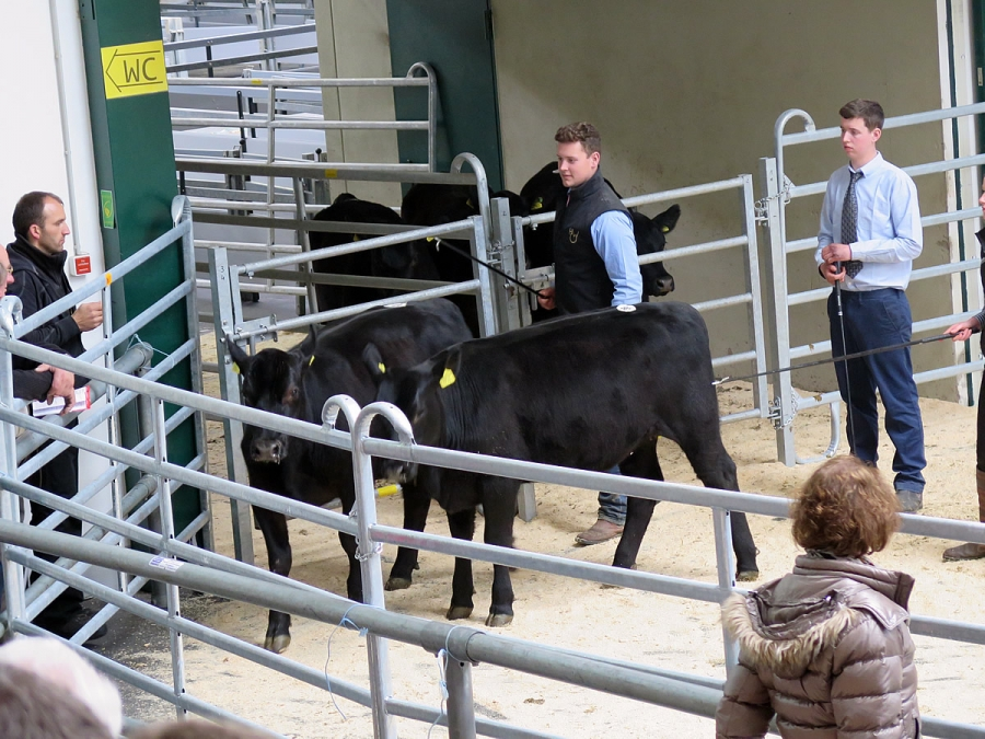 5. Aberdeen Angus Auktion 2016 in Wertingen