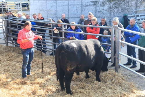 Donaumoos breeding better bulls